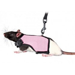Arnés para ratones, cobayas y cerdos de guinea