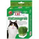 Hierba para gato